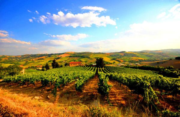 Weinanbaugebiet Babalù blauer Himmel